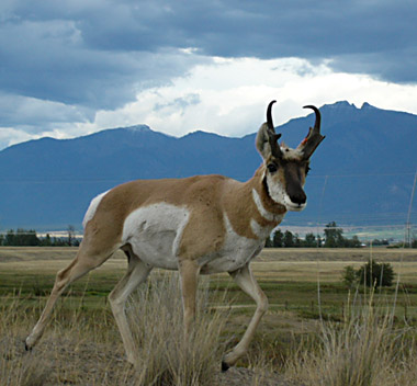 Wyoming Offers Great Pronghorn Hunting on Public Land