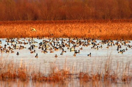 Duck Hunting Drives Land Values Higher