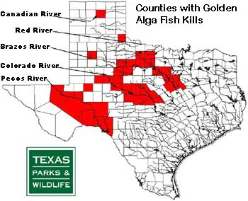 TPWD Monitors Golden Alga in Texas Lakes and Rivers