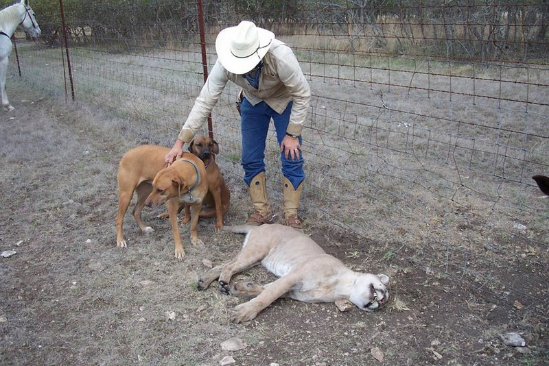 http://www.wildlifemanagementpro.com/wp-content/uploads/2008/05/kerr-county-mountain-lion-04.jpg