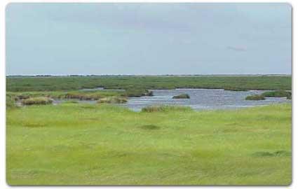 Murphree Wildlife Management Area
