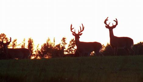 CWD could spread easier than you think