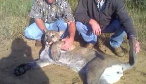Mountain Lion Shot Near Laredo, Texas