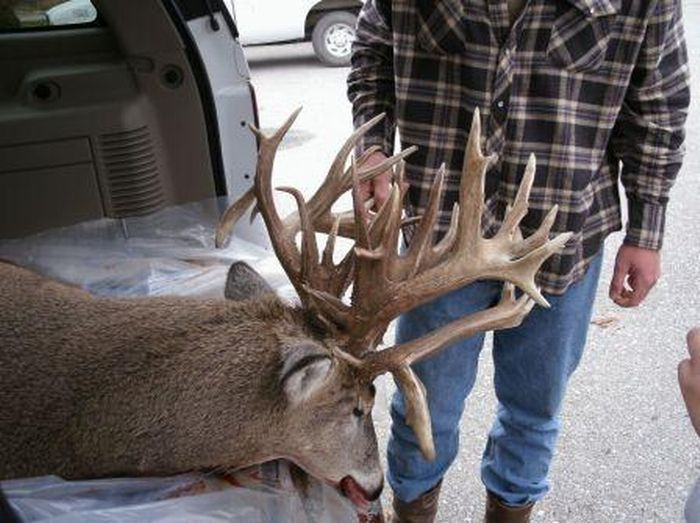 38 Point Nebraska Whitetail
