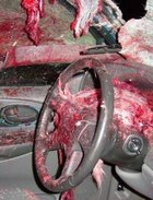 Horrible Deer-Automobile Accident Photos
