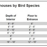 Bird House Dimensions and Other Bird House Tips