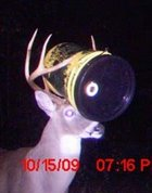 Deer with Bucket in Antlers