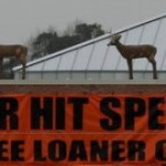 Horrible Deer-Auto Accident Photos
