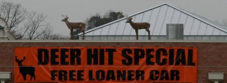 Deer-Auto Collisions are Big Money!