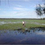 Coastal wetlands for waterfowl management