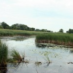 This flooded wetland will benefit ducks and geese