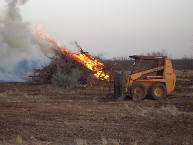 Selective Brush Control: Habitat Management in Texas