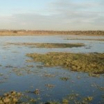 Waterfowl Management: Depressions for Ducks