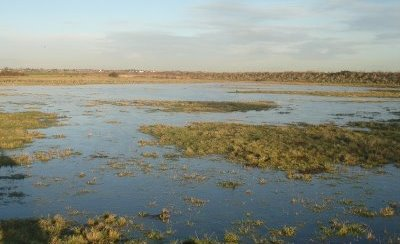 Wetland Management for Better Duck Hunting
