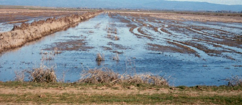 Waterfowl management for Wetland Habitat