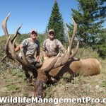 Trophy Elk Hunting