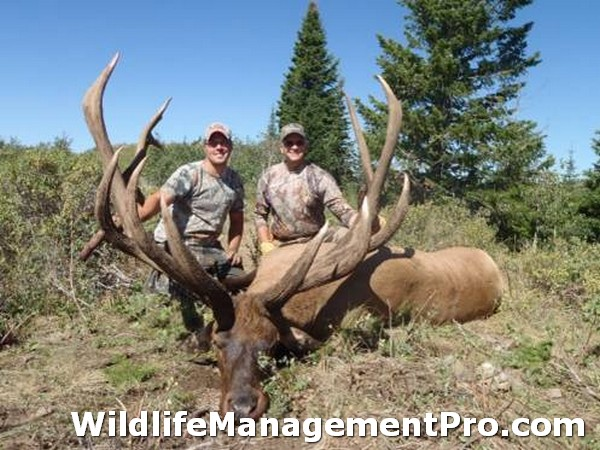 2010 World Record Bull Elk http://www.wildlifemanagementpro.com/2010/12/31/world-record-elk-from-idaho/world-record-elk-02/