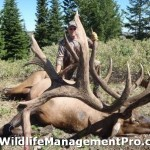 World Record Elk