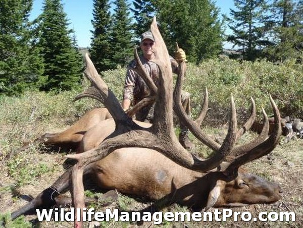 2010 World Record Bull Elk http://www.wildlifemanagementpro.com/2010/12/31/world-record-elk-from-idaho/world-record-elk-06/