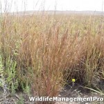 Texas Prescribed Burn Workshops for Habitat Management