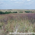 Quail Hunting in Texas – Habitat Before Regulations