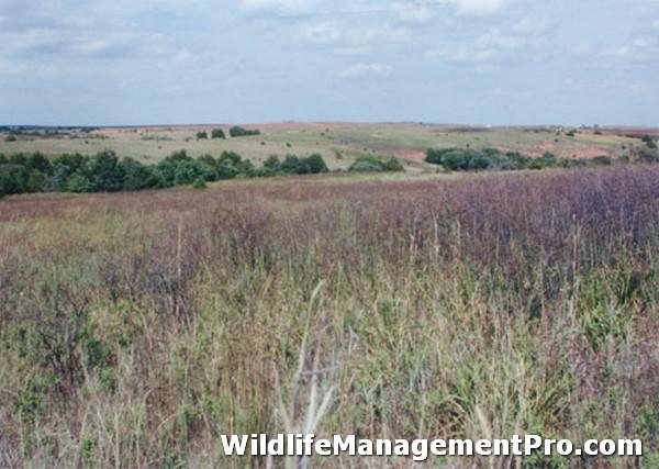Quail Hunting in Texas: Quail Habitat Management, Not Regulations