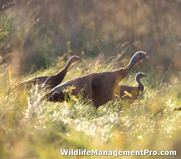 Wildlife Management for Texas Wildlife - Kerr County & Brown County