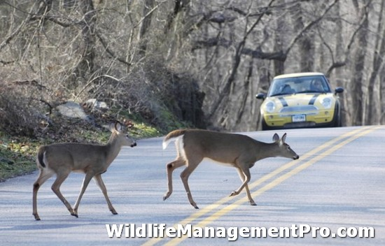 Deer Overpopulation Causes Habitat Management Issues