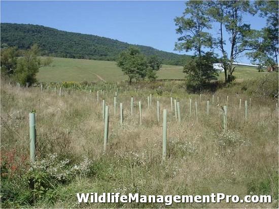 Texas Tree Nursery for Wildlife Habitat Management