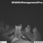 Mountain Lion Group Photo