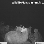 Photo of a Group of 8 Mountain Lions in Texas