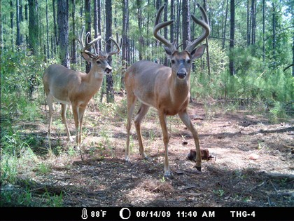Game Cameras for Whitetail Deer Surveys