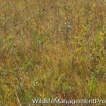 Conservation Easements for Land and Wildlife Management
