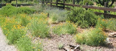 Wildscaping in Texas: Better Habitat, Water Conservation