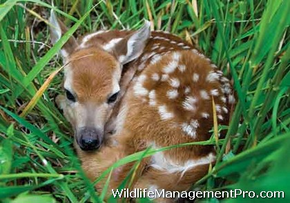 Abandoned Fawn What Should I Do?