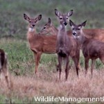 Mason Mountain Wildlife Management Area (WMA)