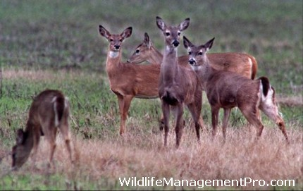 Mason Mountain WMA Demonstrates Wildlife Management, Offers Deer Hunting