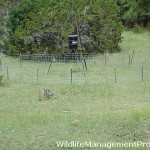 Deer Hunting: Feeder Pen Size?