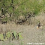 Wildlife Management on Private Lands: Evaluating Habitat Requirements
