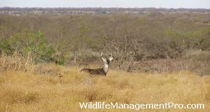 Grazing Management for Habitat Management, Whitetail Deer and Other Wildlife