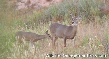 Wildlife Habitat Management for Deer