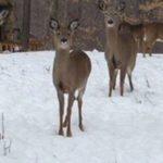 Pennsylvania Gets Split Firearms Deer Season