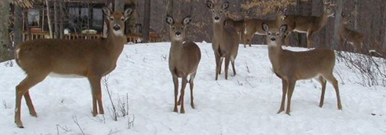 Pennsylvania Deer Hunting Regulations