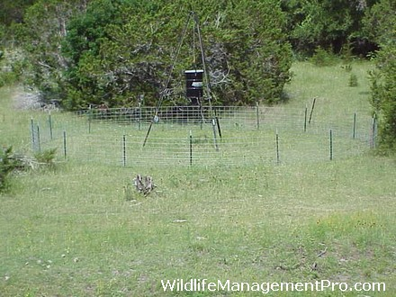 Deer Hunting Feeder Pen Size Wildlife Pro